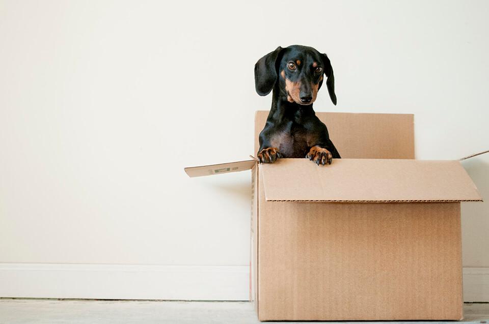 Ga je verhuizen? Hou je gegevens up-to-date