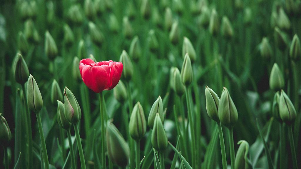 opvallende bloem in veld